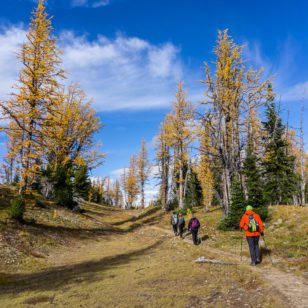 Hiking amongst larches at Frosty Mountain in Manning Provincial Park
