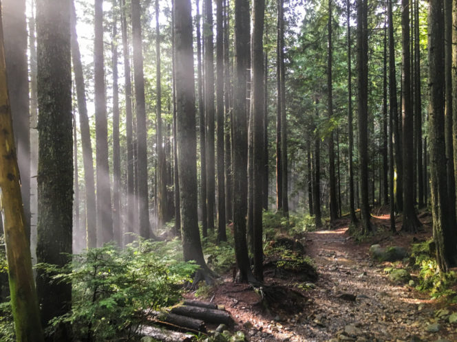 Brother's Creek Trail in West Vancouver, BC