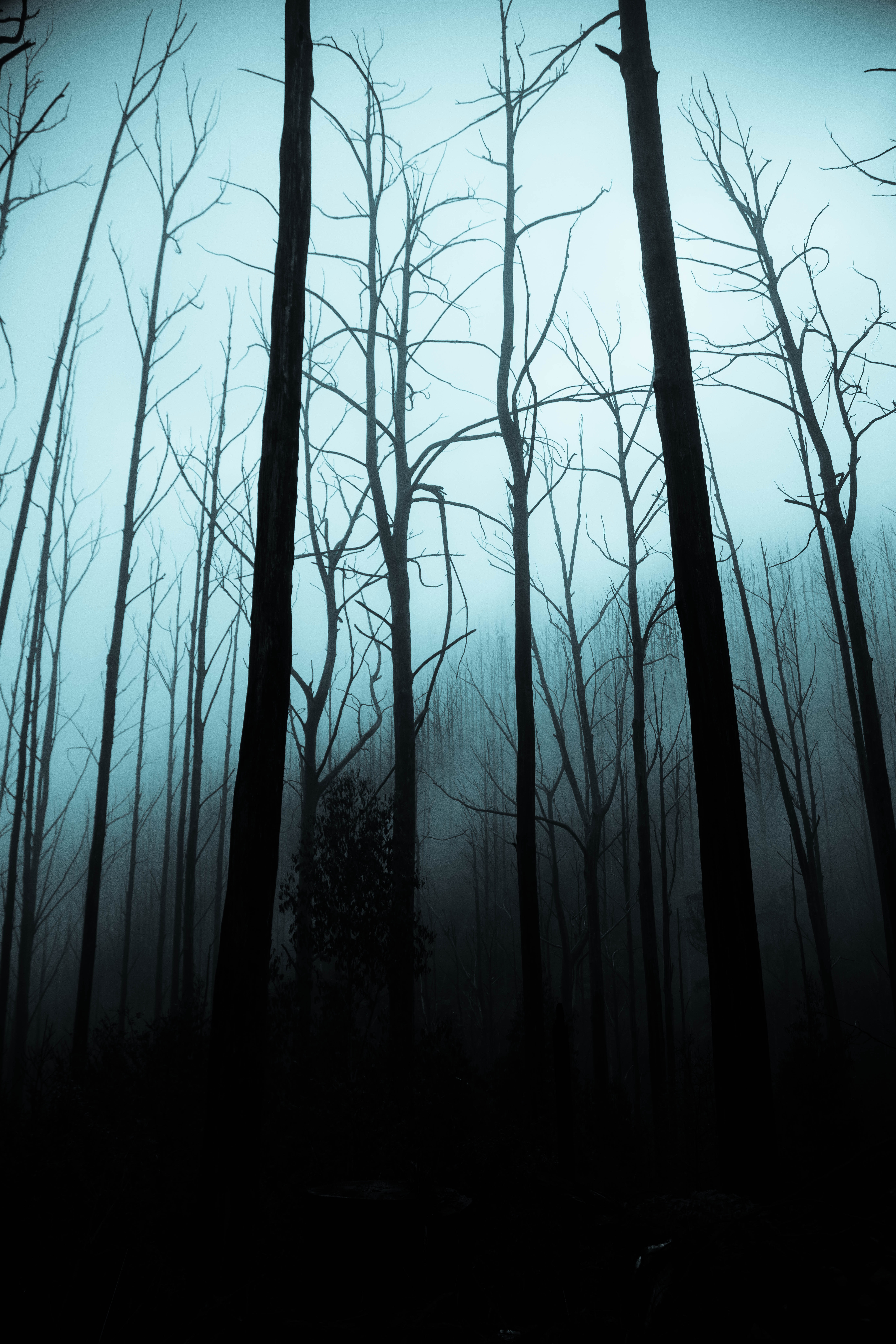 Haunted vancouver ghost stories