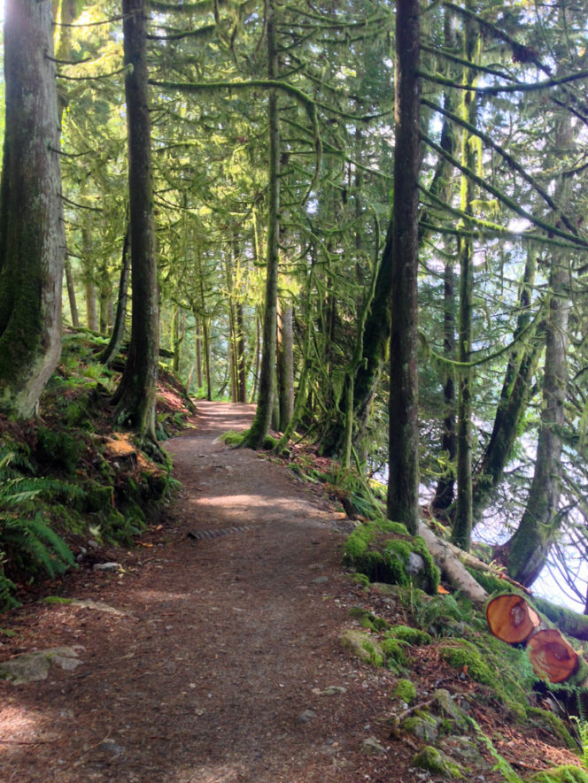 Forested trail at Buntzen Lake near Vancouver