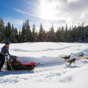 Dogsledding in the Callaghan Valley near Whistler