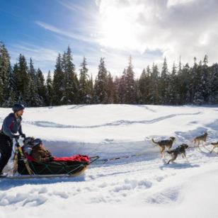 Dogsledding in the Callaghan Valley near Whistler