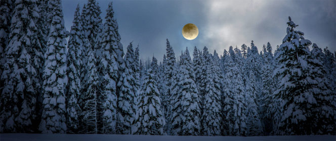 Full moon over a snowy forest