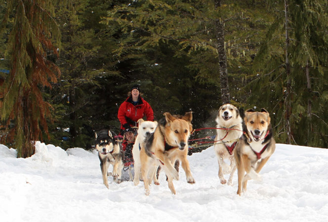 Dog sledding near Whistler