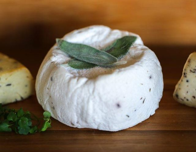 vegan cheesemaking