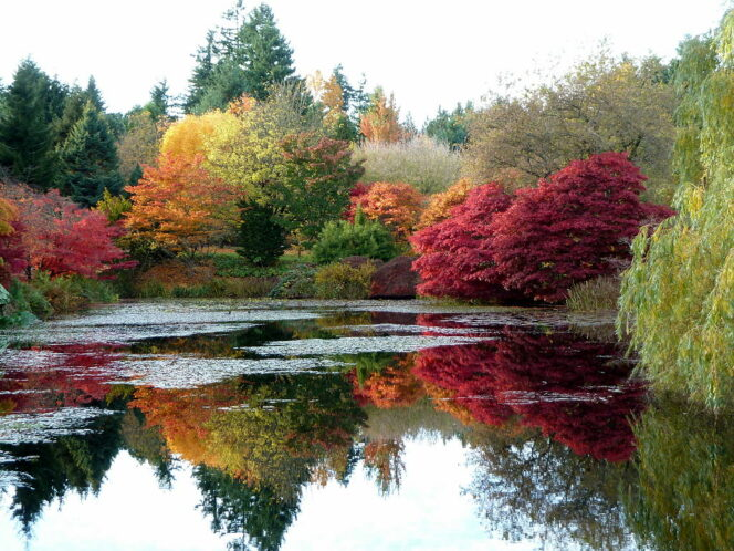 Van Dusen Gardens in Fall