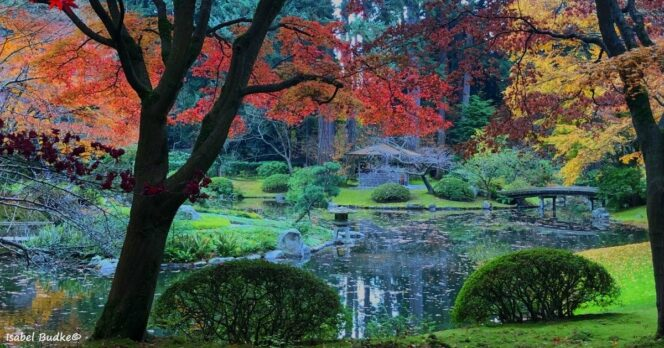 Fall colours at Nitobe Garden at the University of British Columbia in Vancouver
