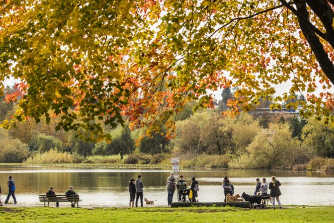Fall colours at Trout Lake in Vancouver