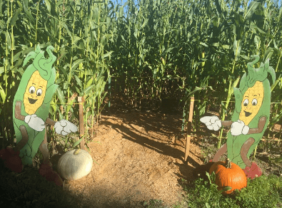 The entrance to the children's corn maze at Laity Pumpkin Patch North near Vancouver