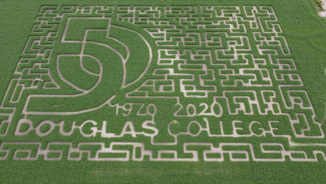 Aerial view of the Bose and Sons corn maze near Vancouver