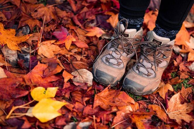 A hiker walks through fall leaves