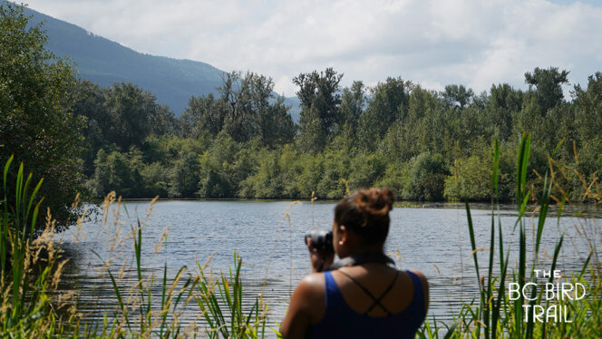 Woman looking through a spotting scope at Great Blue Heron Nature Reserve in Chilliwack