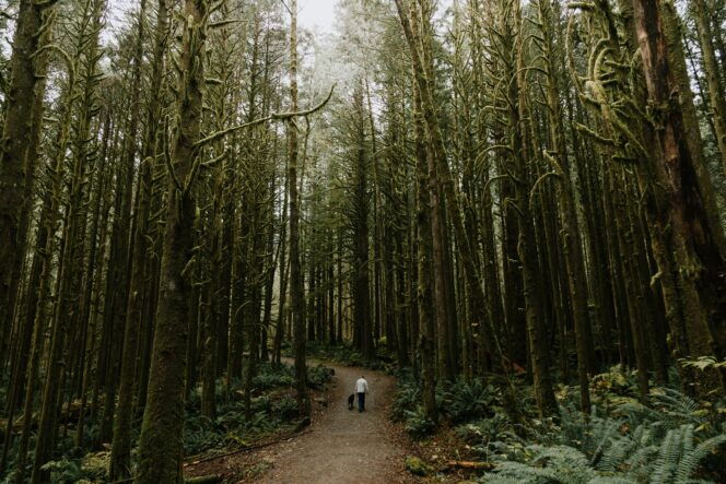 Forest Trail in Golden Ears Provincial Park