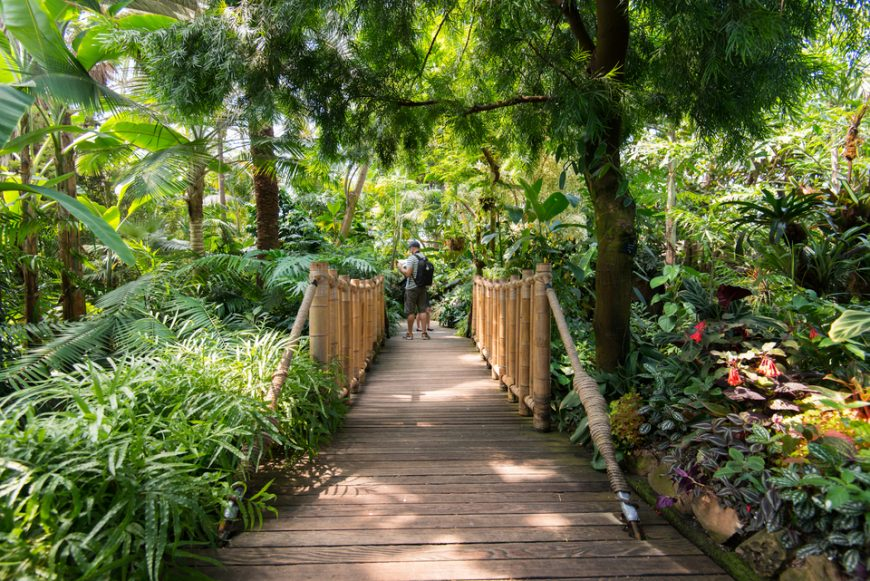 Tropical garden at Bloedel Conservatory Vancouver