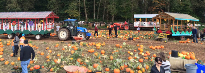 Port Kells Nursesries pumpkin patch near Vancouver