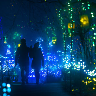 VanDusen Botanical Garden with Christmas lights; support local this holiday season