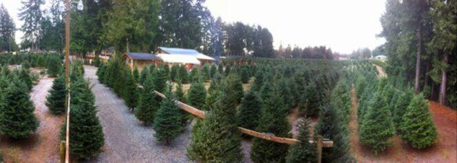 Frosty's Family Christmas Tree Farm near Vancouver