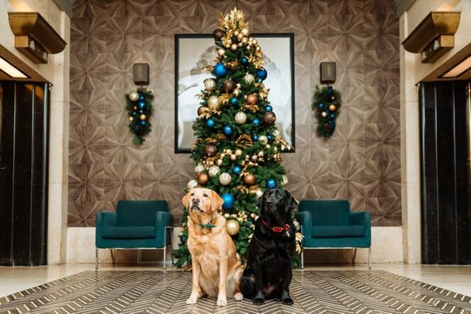 Enjoy the Festival of Trees with an Online Virtual Tour