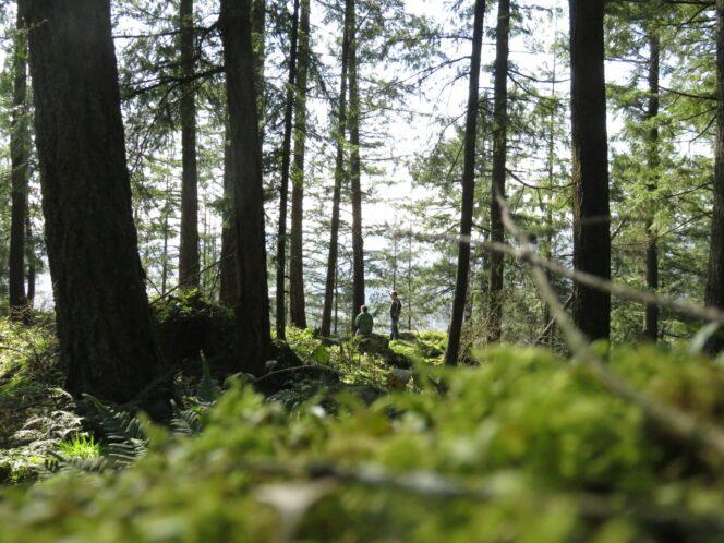 Forest in Minnekhada Regional Park