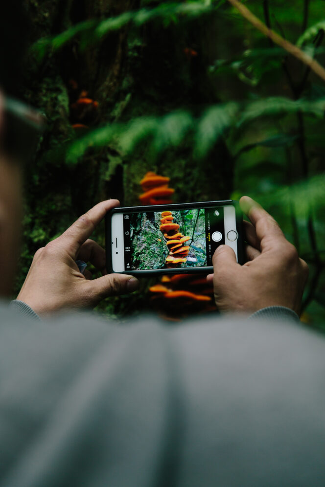A person takes a photo of a fungus in Vancouver