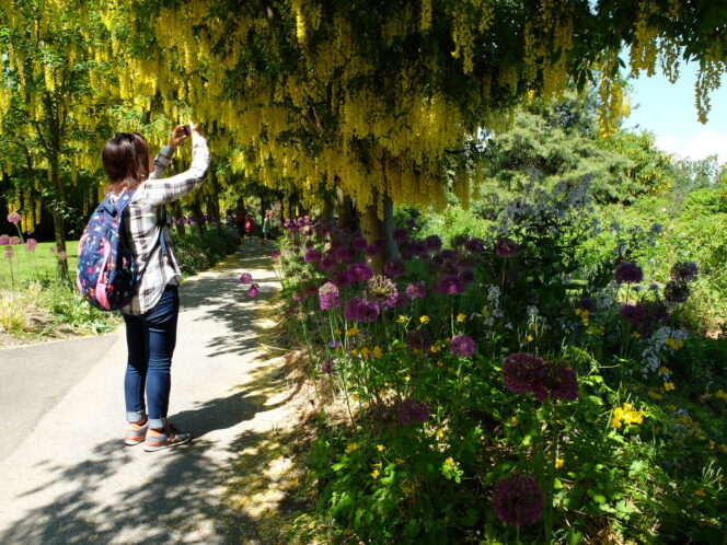 A woman takes a photo of flowers at VanDusen Botanical Garden in Vancouver