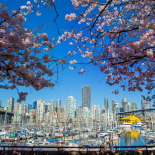 Cherry blossoms near Vancouver Island