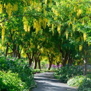 Van Dusen Gardens in Vancouver