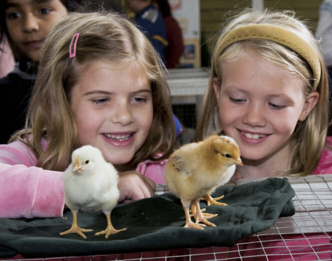 Two young girls look at chicks