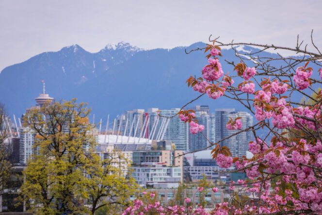Cherry blossoms in front of the Vancouver skyline
