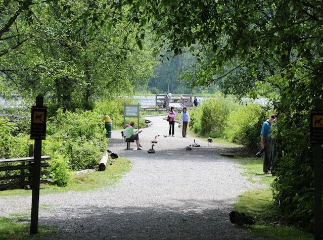 Trail at Burnaby Lake Regional Park