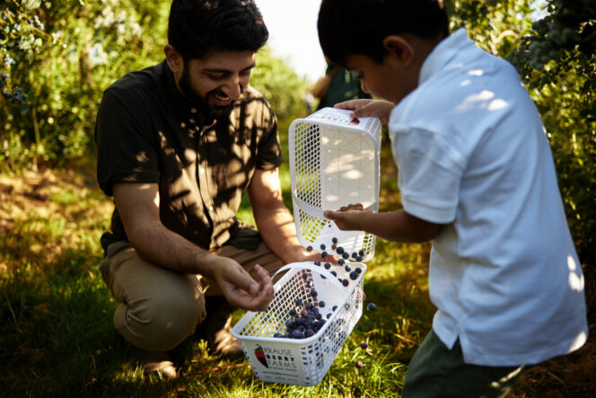 Family berry picking at Krause Berry Farms in Langley