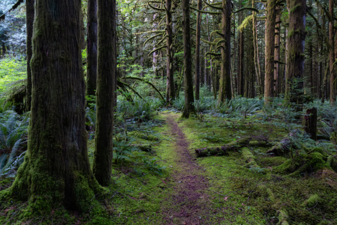 Hiking trail in Golden Ears Provincial Park