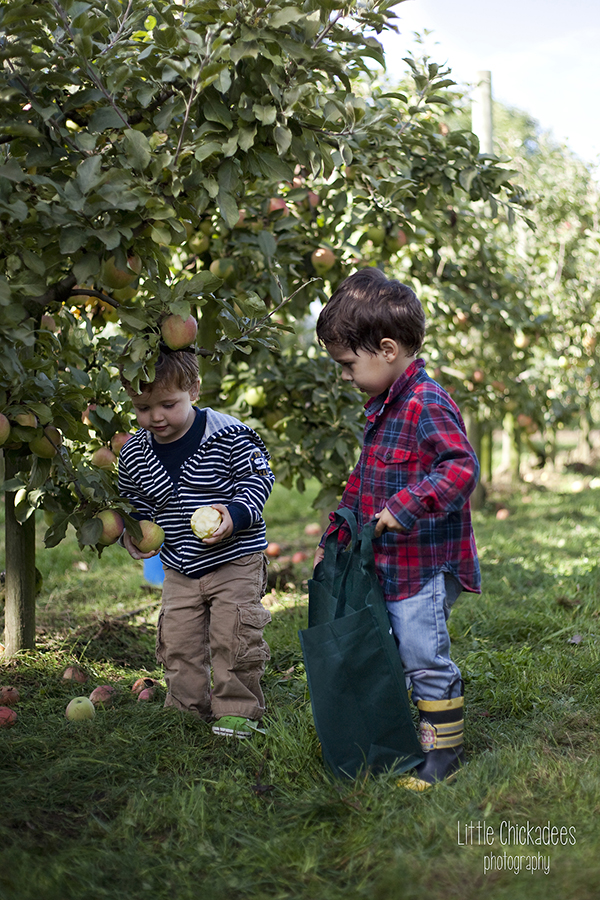 Kids picking apples at Taves Family Farms near Vancouver