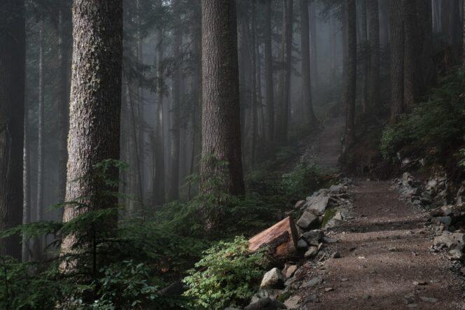 Howe Sound Crest Trail to St. Mark's Summit