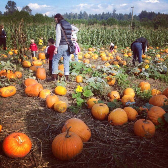 Aldor Acres pumpkin patch near Vancouver