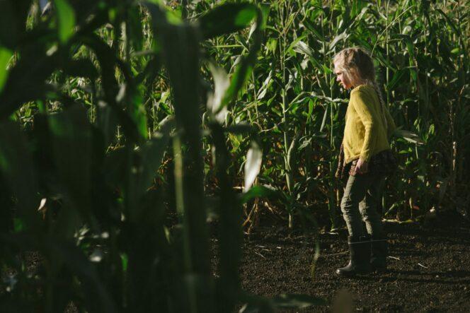 A child in a corn maze