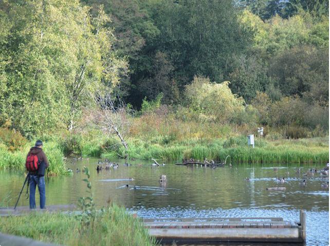 bird watching at Burnaby Lake