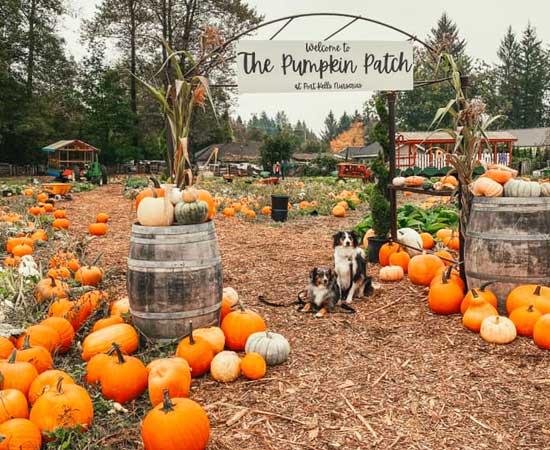 Port Kells Nurseries pumpkin patch near Vancouver