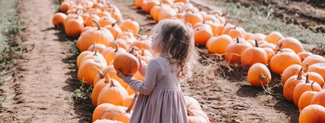 pumpkin patch at Maan family farms