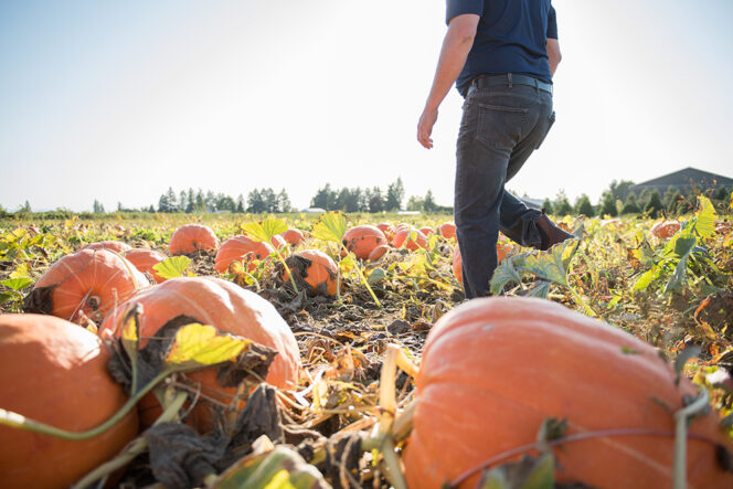Pumpkin patch at Taves Family Farms near Vancouver